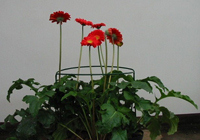 Květinové podpěry