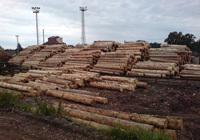 Výkup a prodej dřeva