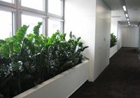 Rostliny pro interiér